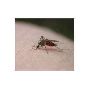 Picaduras y Repelentes de insectos
